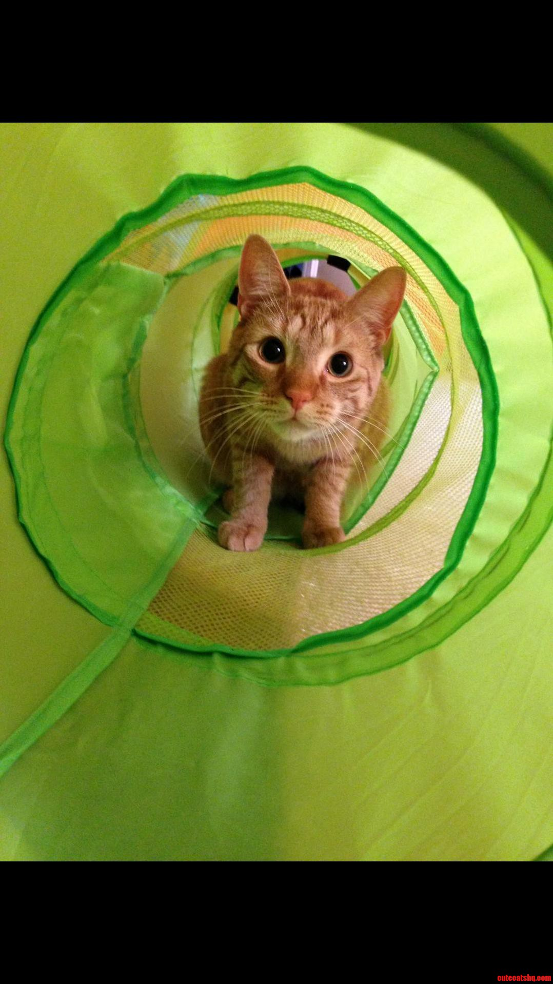 Ollie exploring his new tunnel