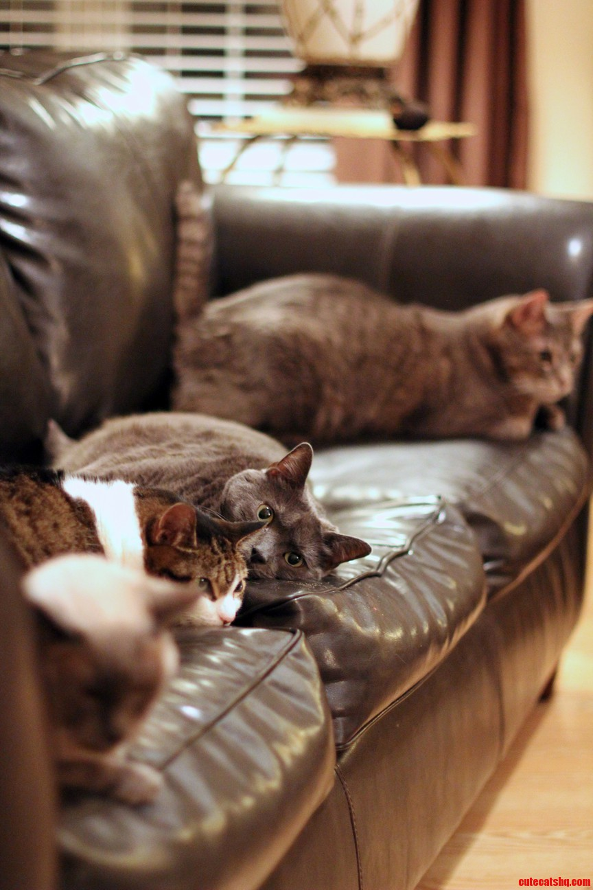 Quality time on the couch for cats