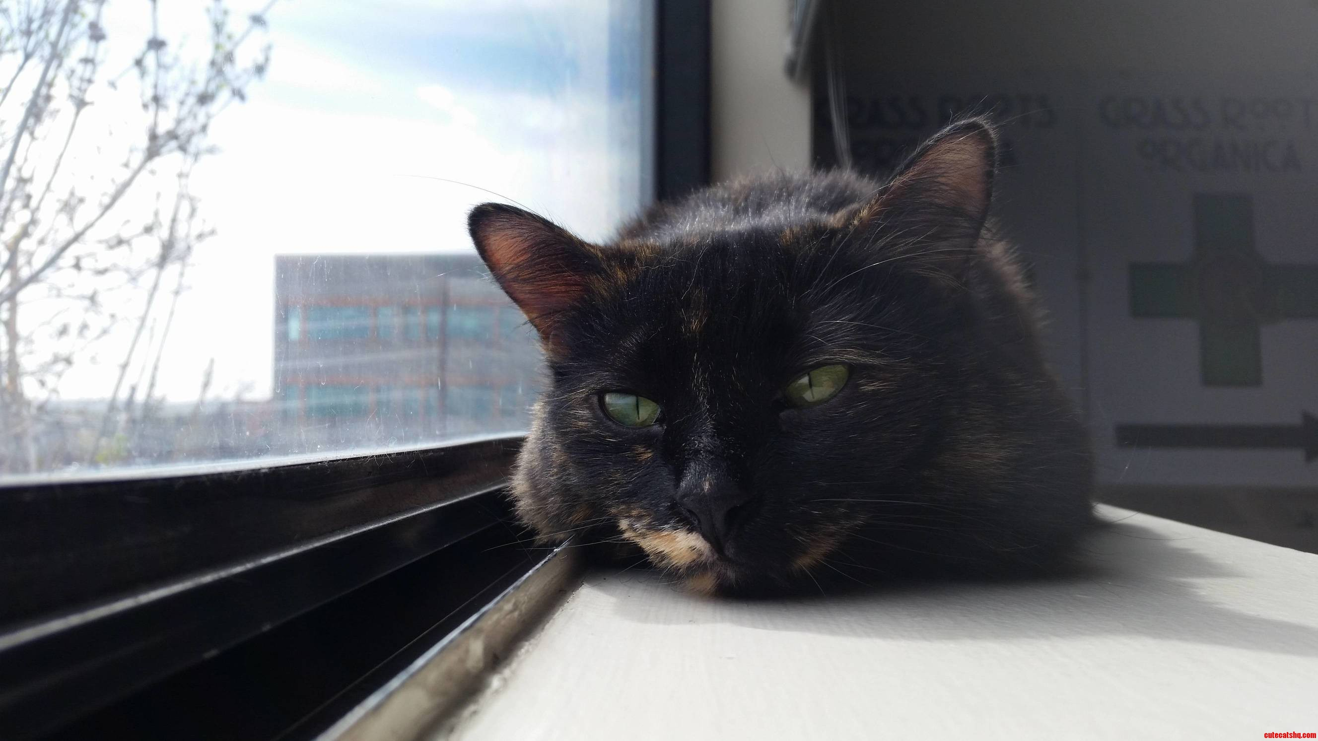 Sensi likes to sleep by the window