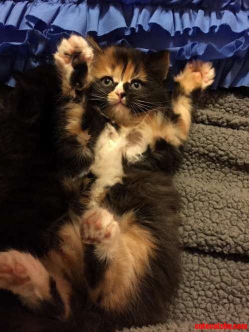 So my wife got a new kitten…
