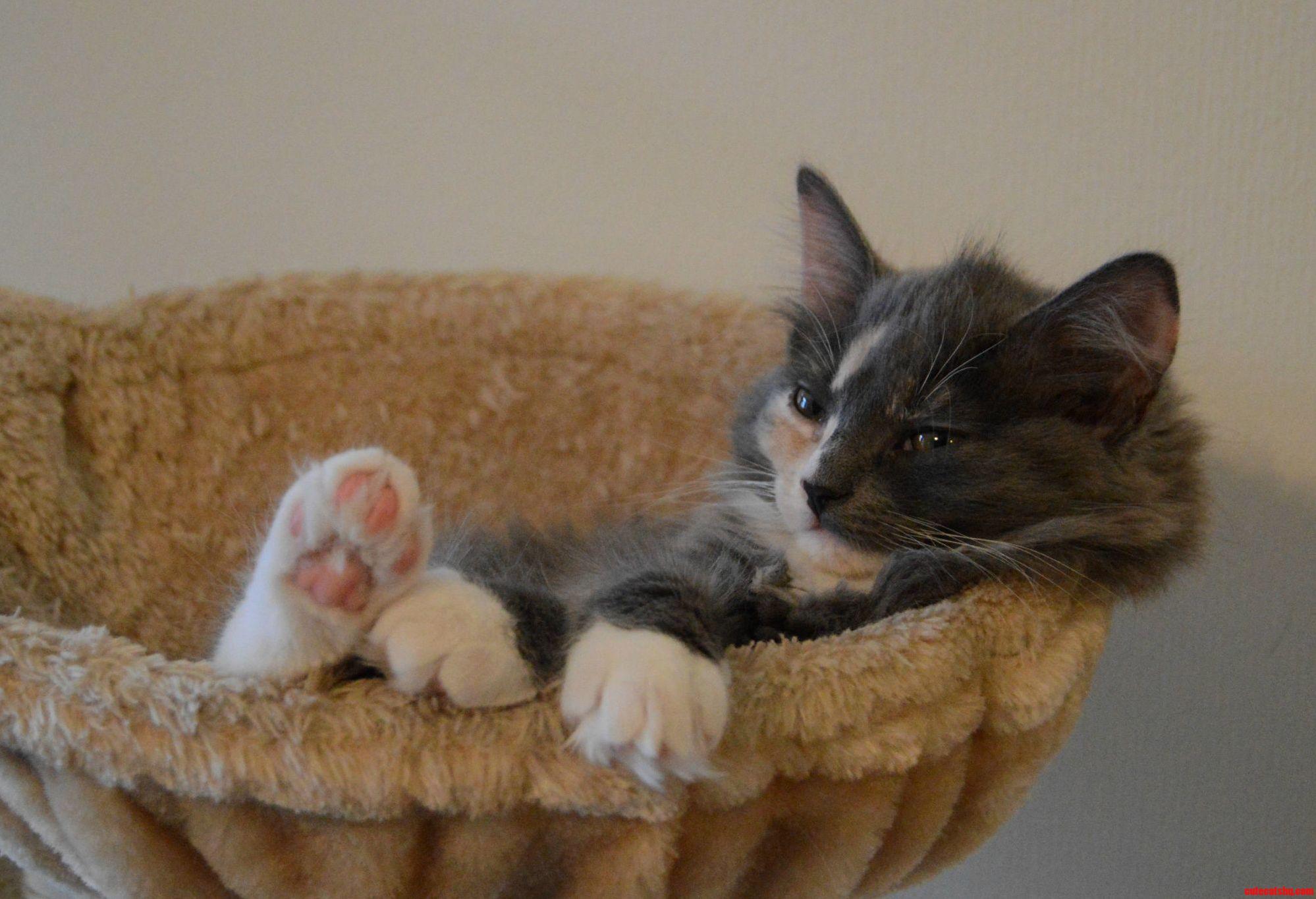 The most interesting kitten