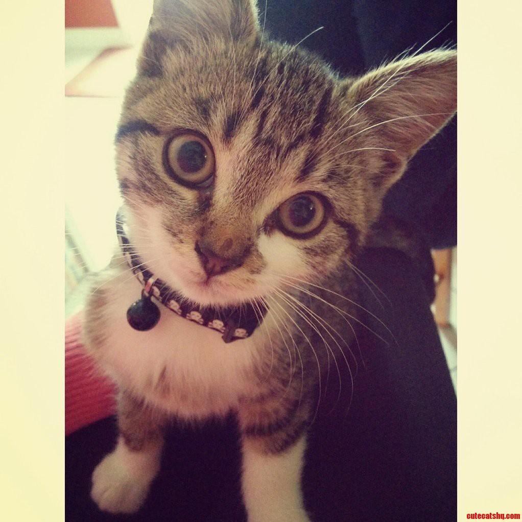 cat stevens new album