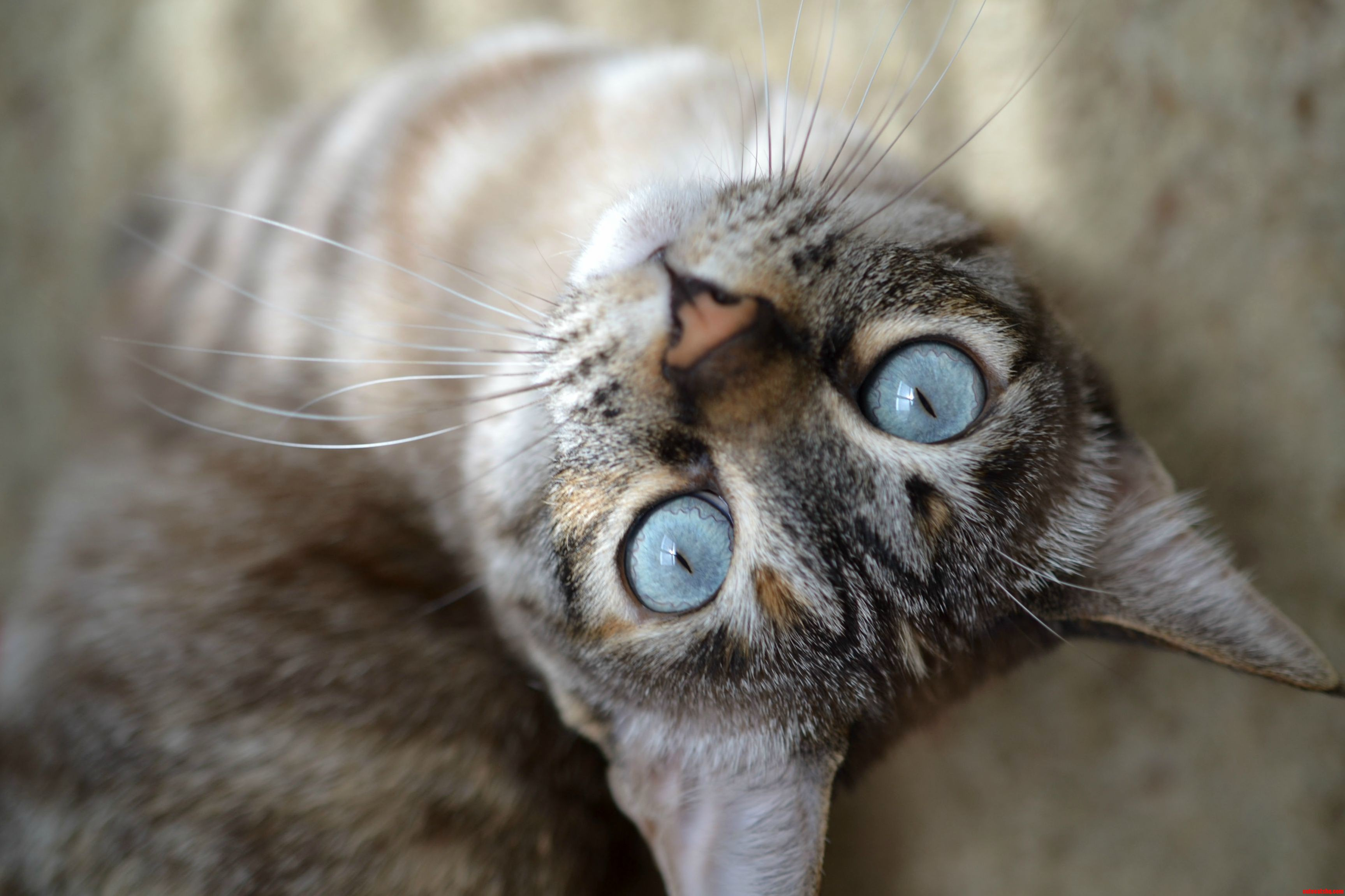 Macro Cat Related Keywords & Suggestions - Macro Cat Long Tail ... Omg Wtf Knock First