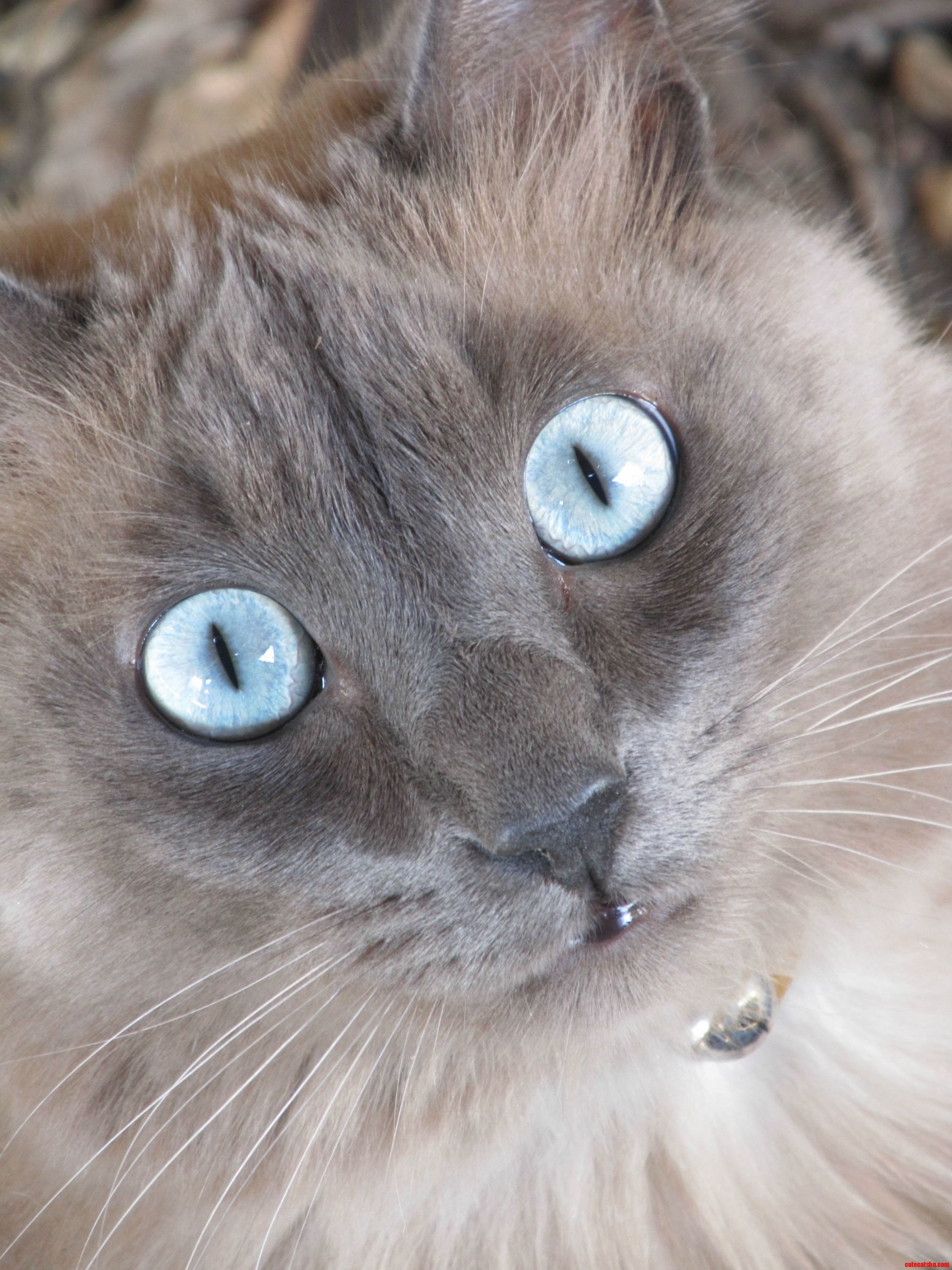 Captivating image of my lil boys baby blues.