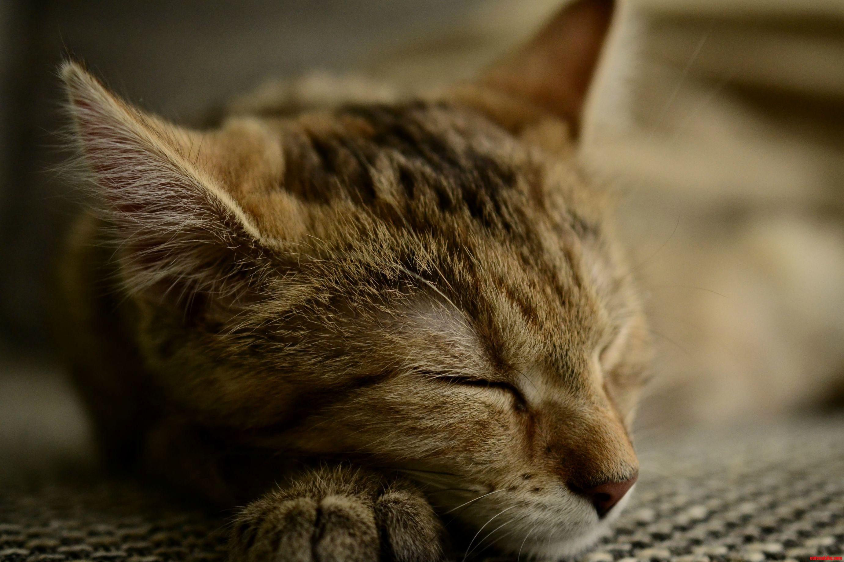 Charlie having a nap oc