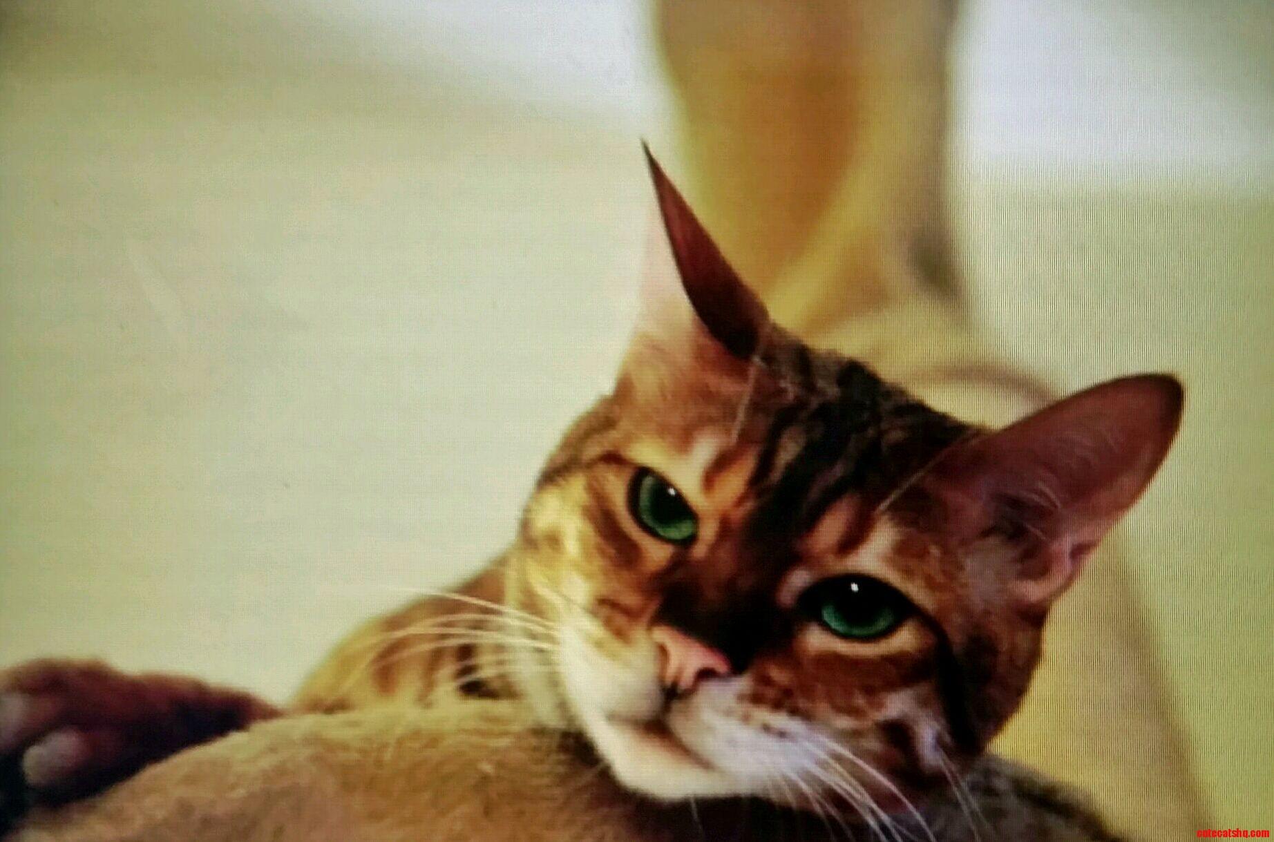 Disinterested cat