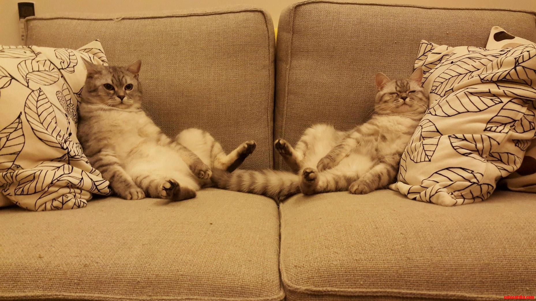 Happy caturday lazy day on the couch 3