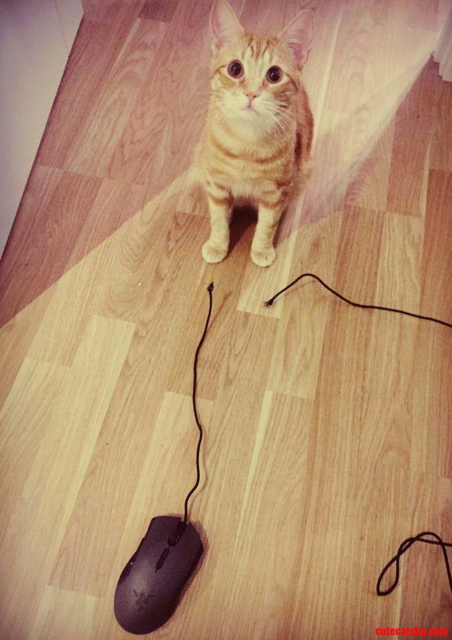 He caught a mouse alright