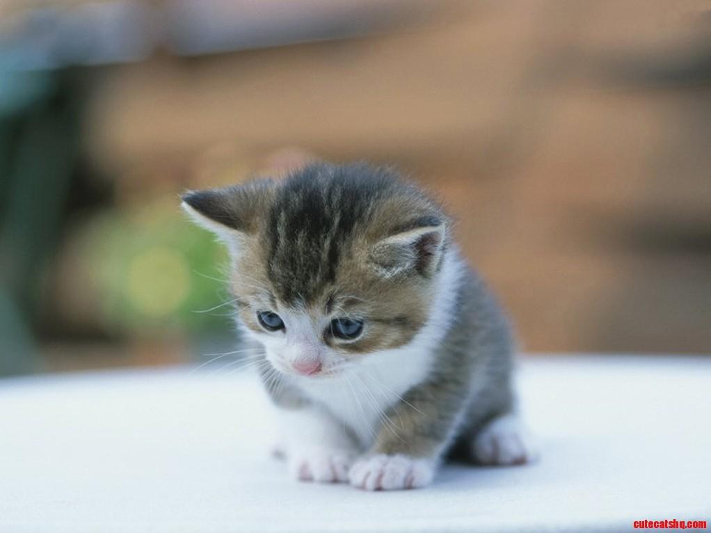 Heres a cute kitty