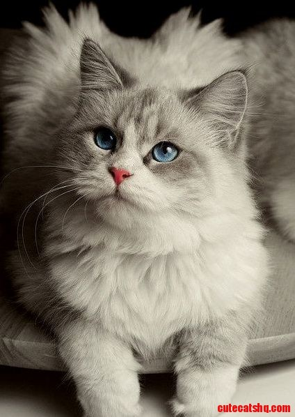 Im a beautiful cat and not an evil kitty