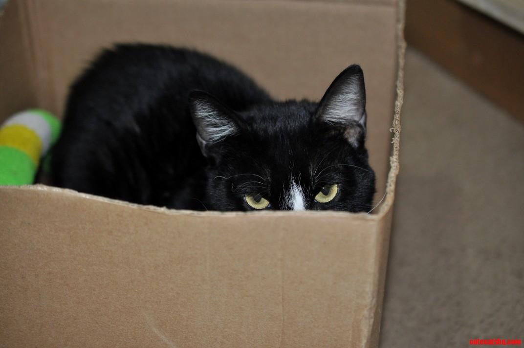 Im assuming he likes his box