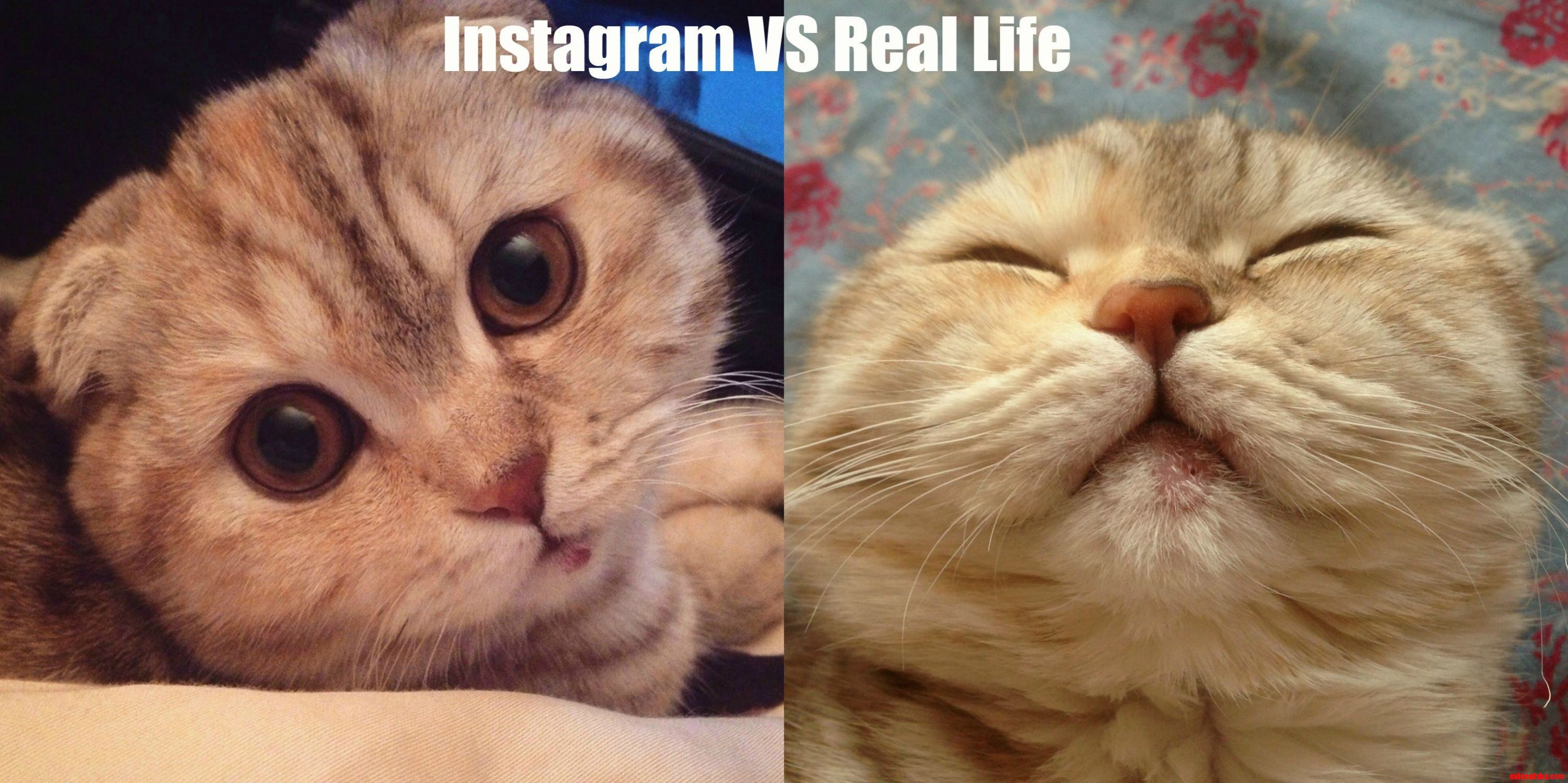 Instagram vs real life