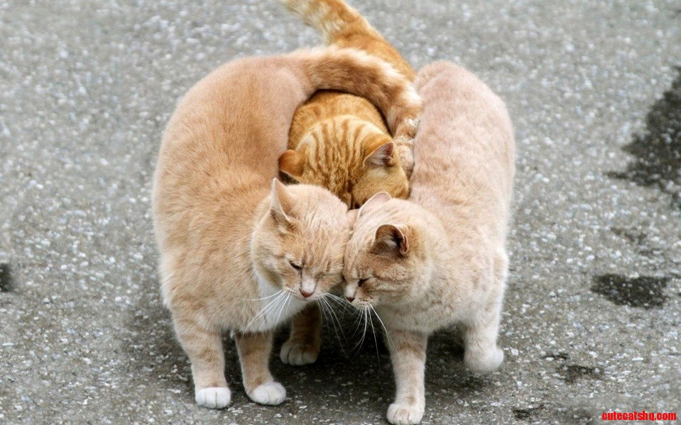 Just watching these three cats make me happy