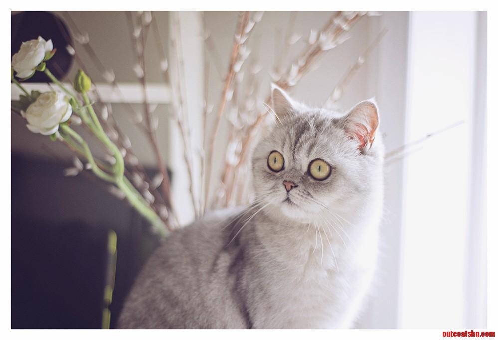 Meet my kitty coco
