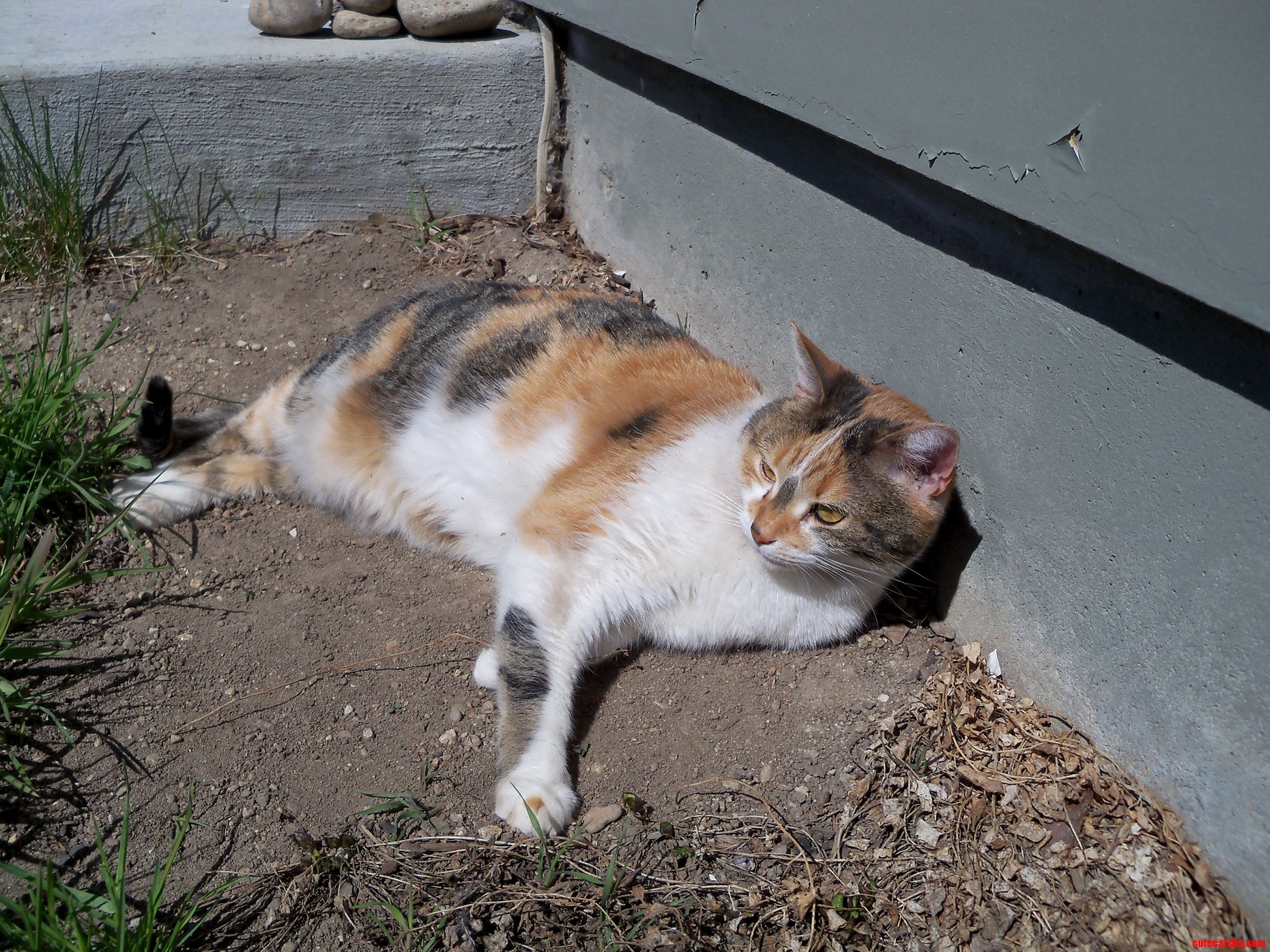 My cat abby loves a good dirt patch