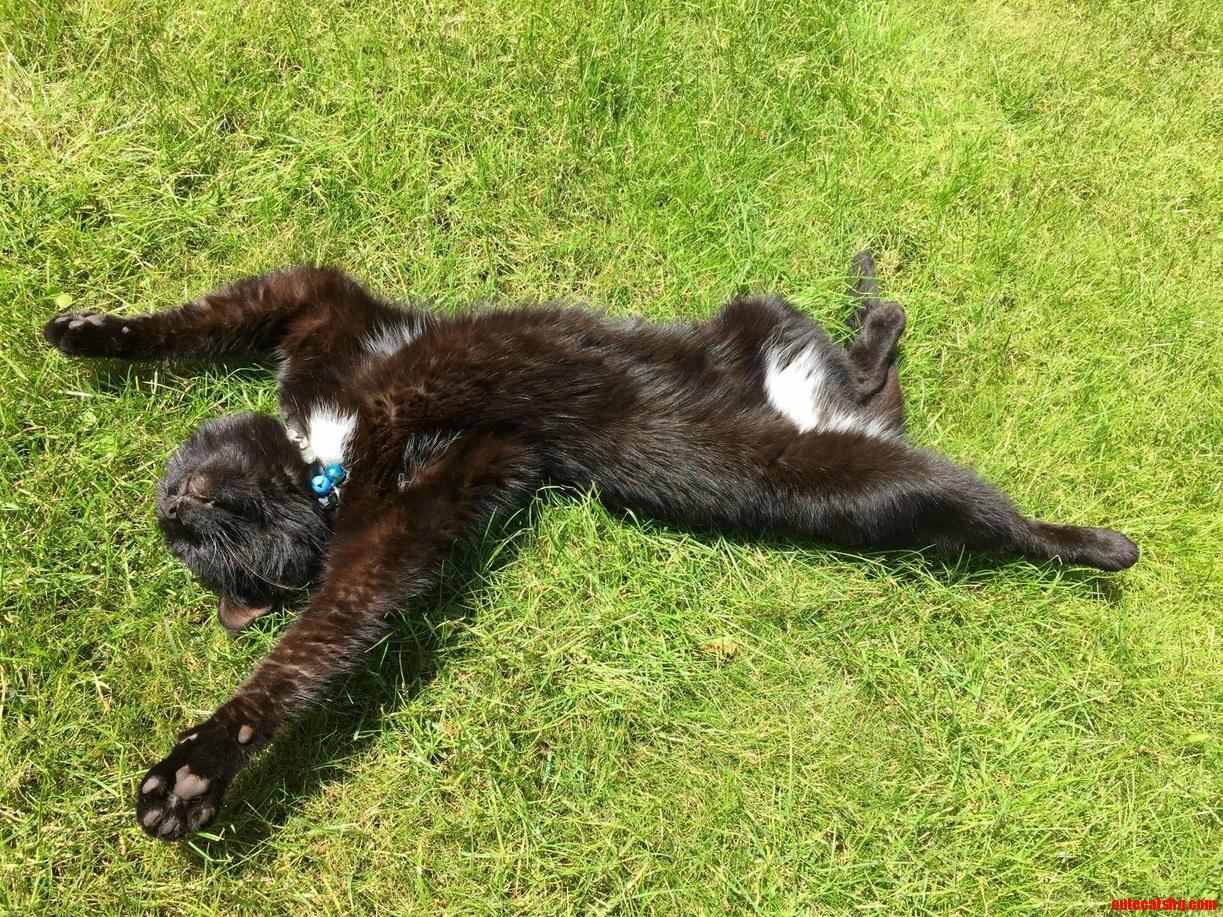 My cat decided to take up sunbathing. so elegant.