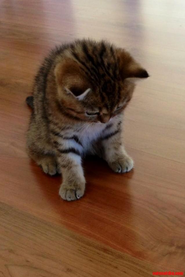 New family member. just so cute…