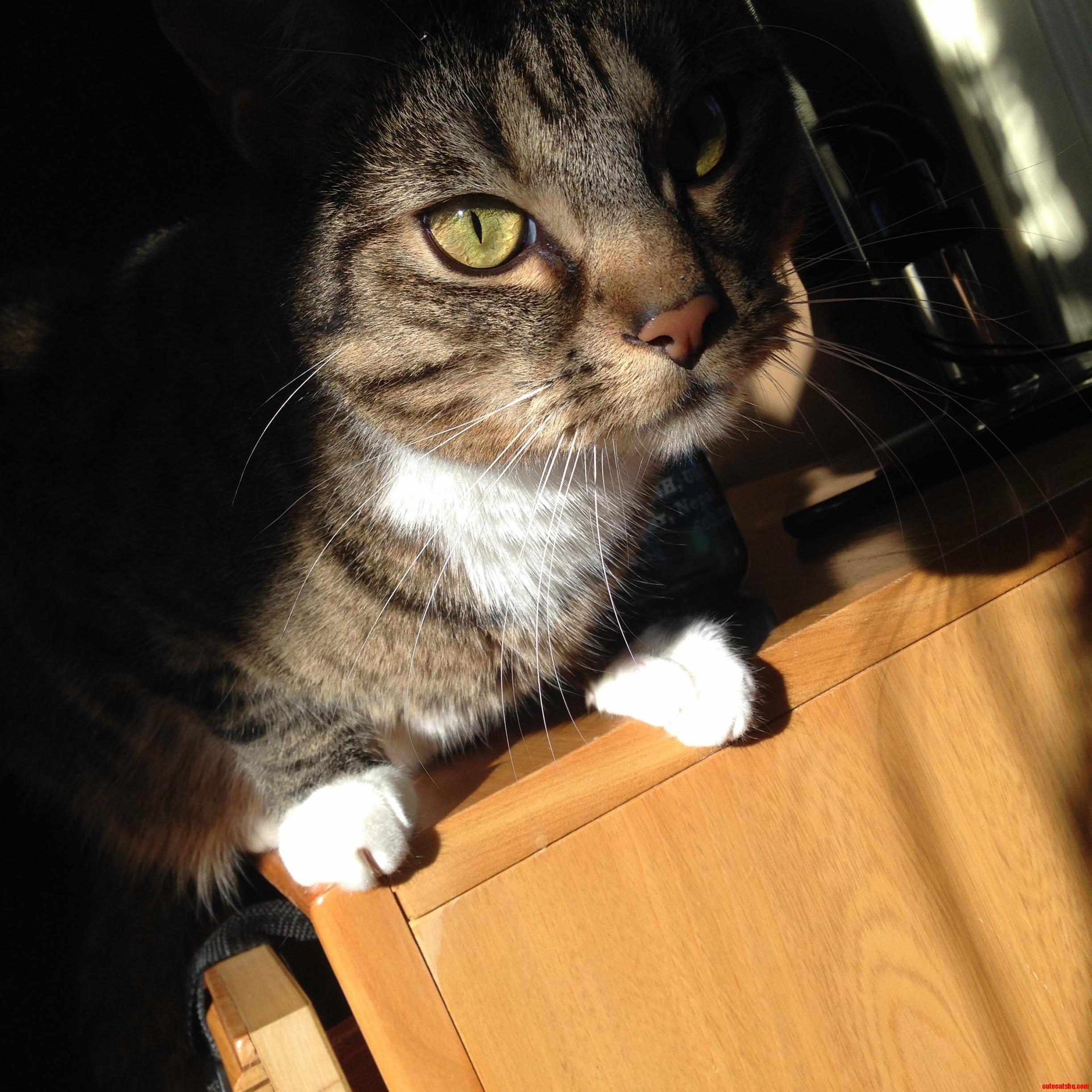 Sad sun cat