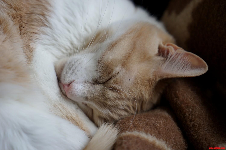 Sprocket fast asleep