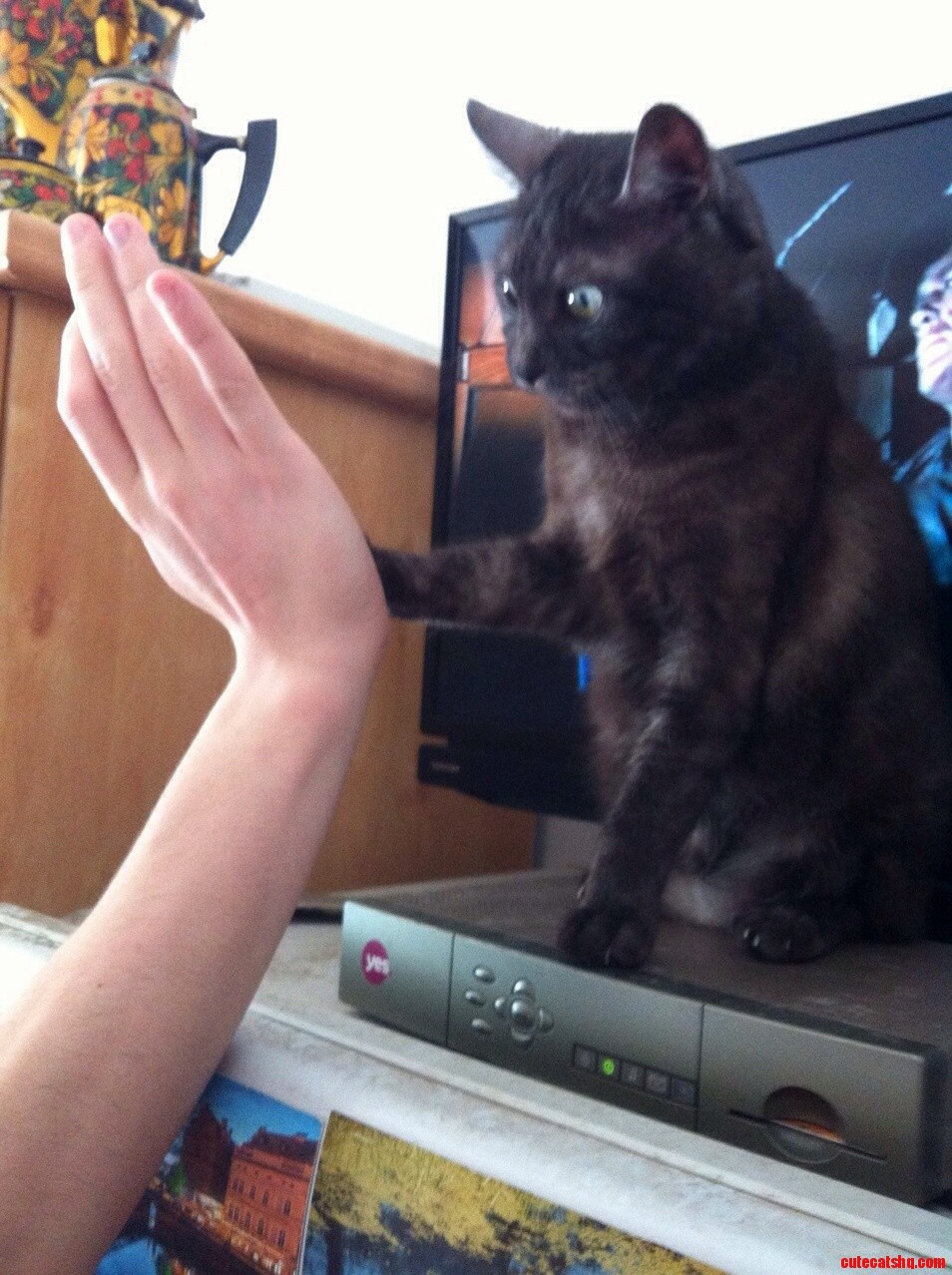 Trying to teach my cat to high five so far so good
