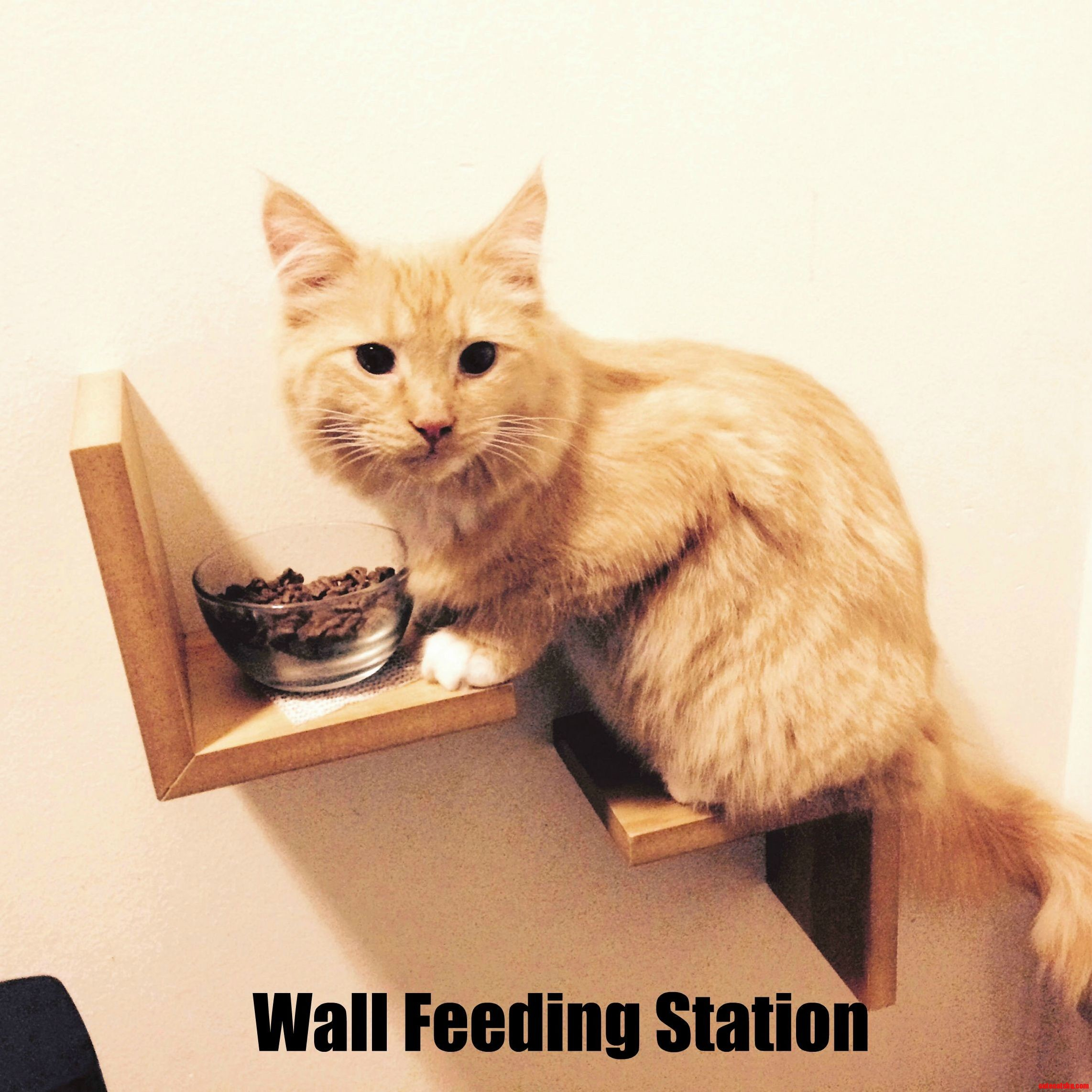 Wall feeding station for cat