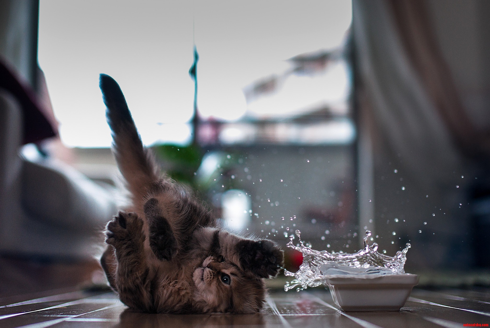 Water and cats they wont mix