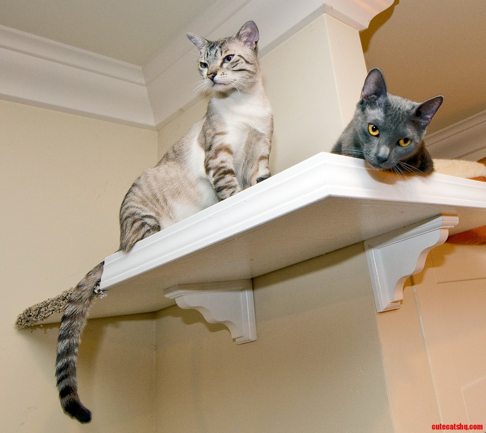 A coupla cool cats just hangin out on the catwalks. Stella and the Samster.