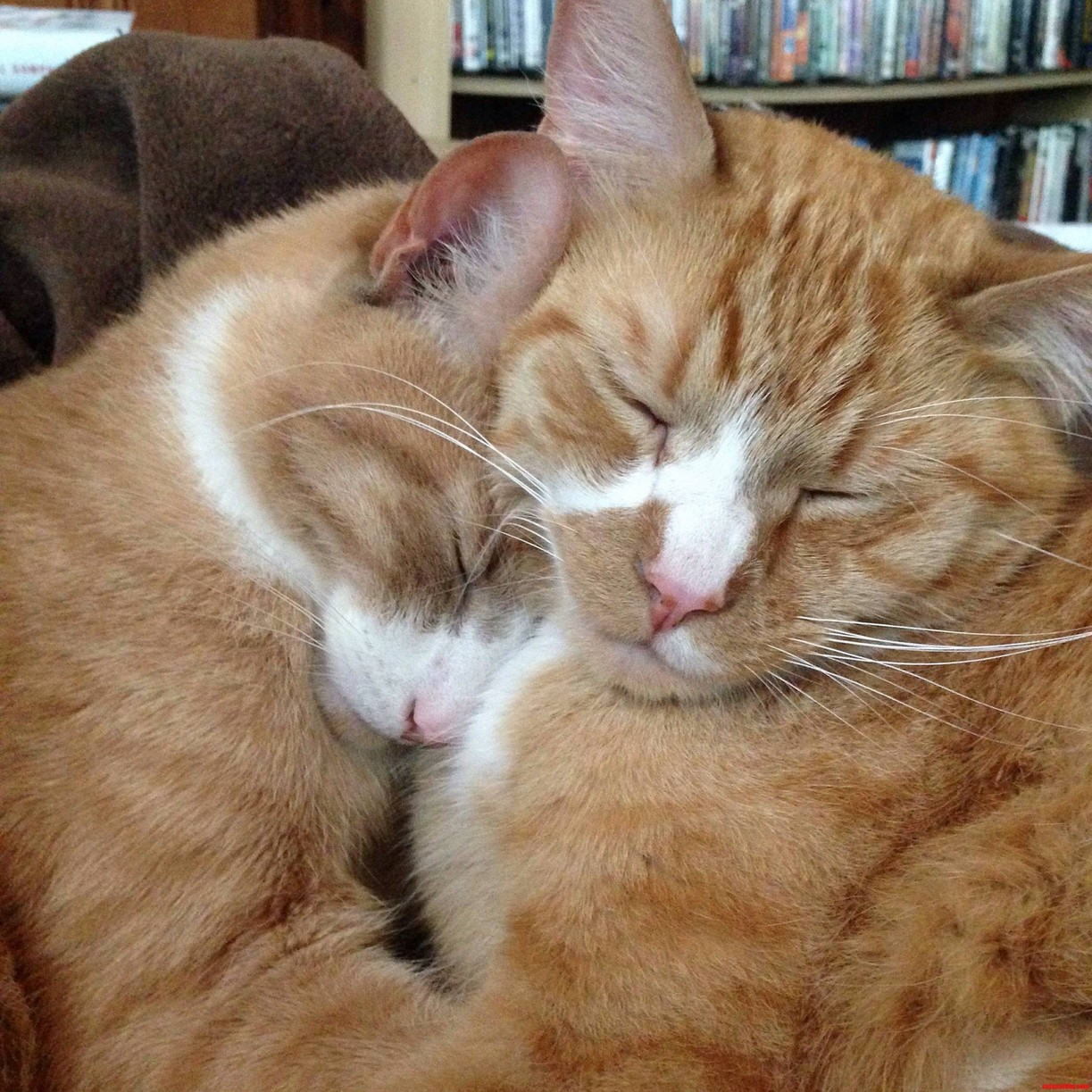 Brother cuddles.
