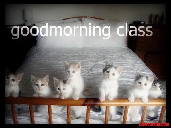 Good morning class of newbies