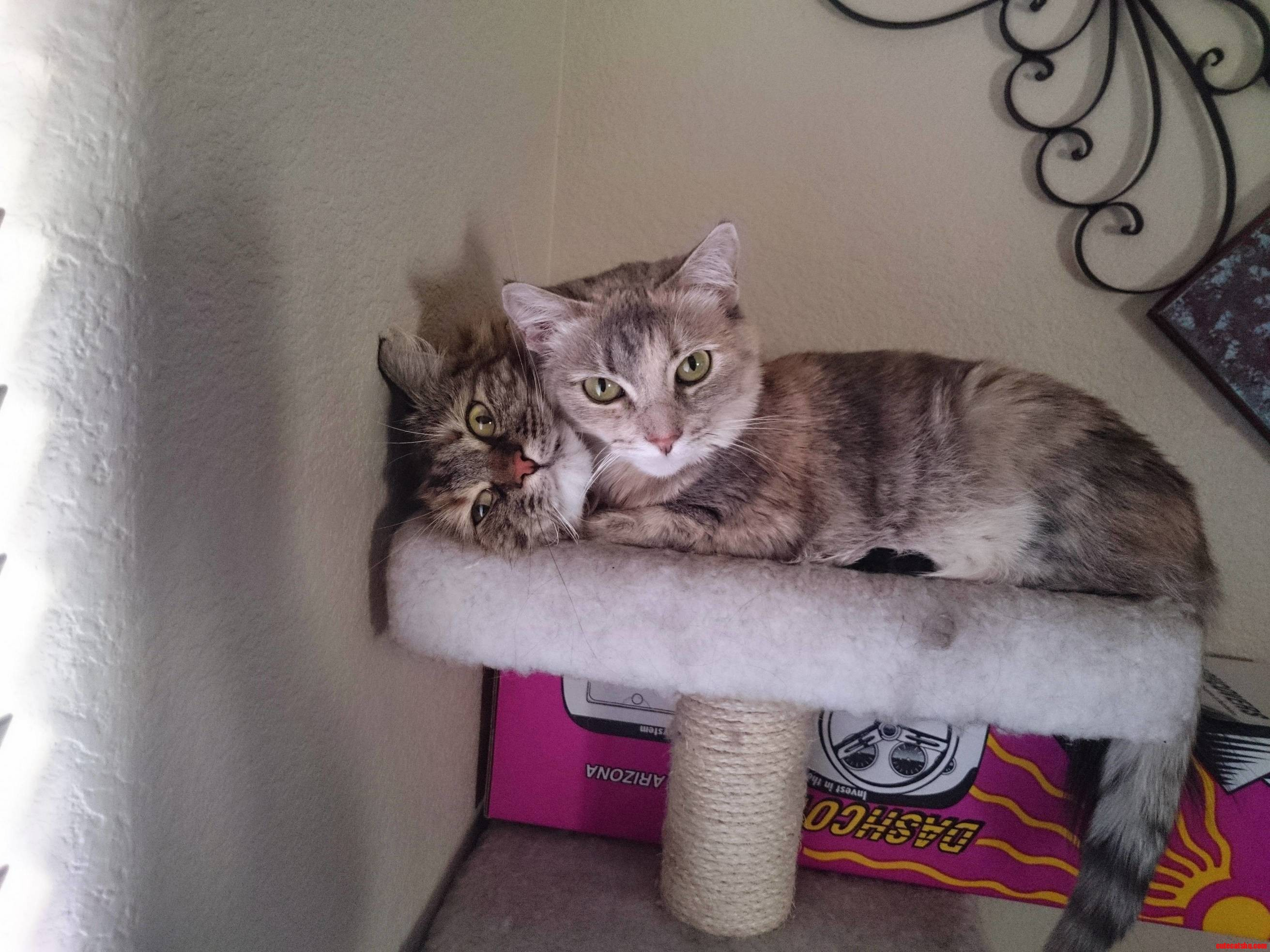 I caught my cats cuddling