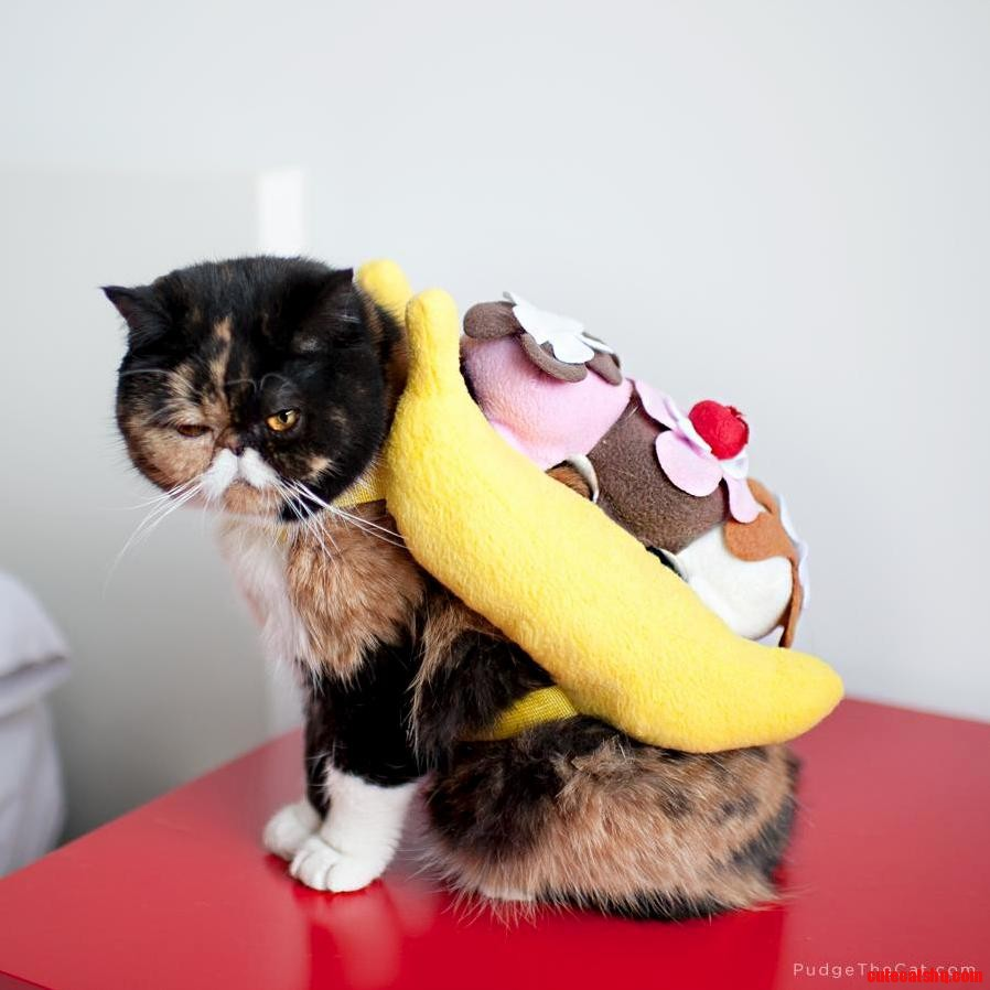 I prefer my banana split in a bowl just like any civilized cat.