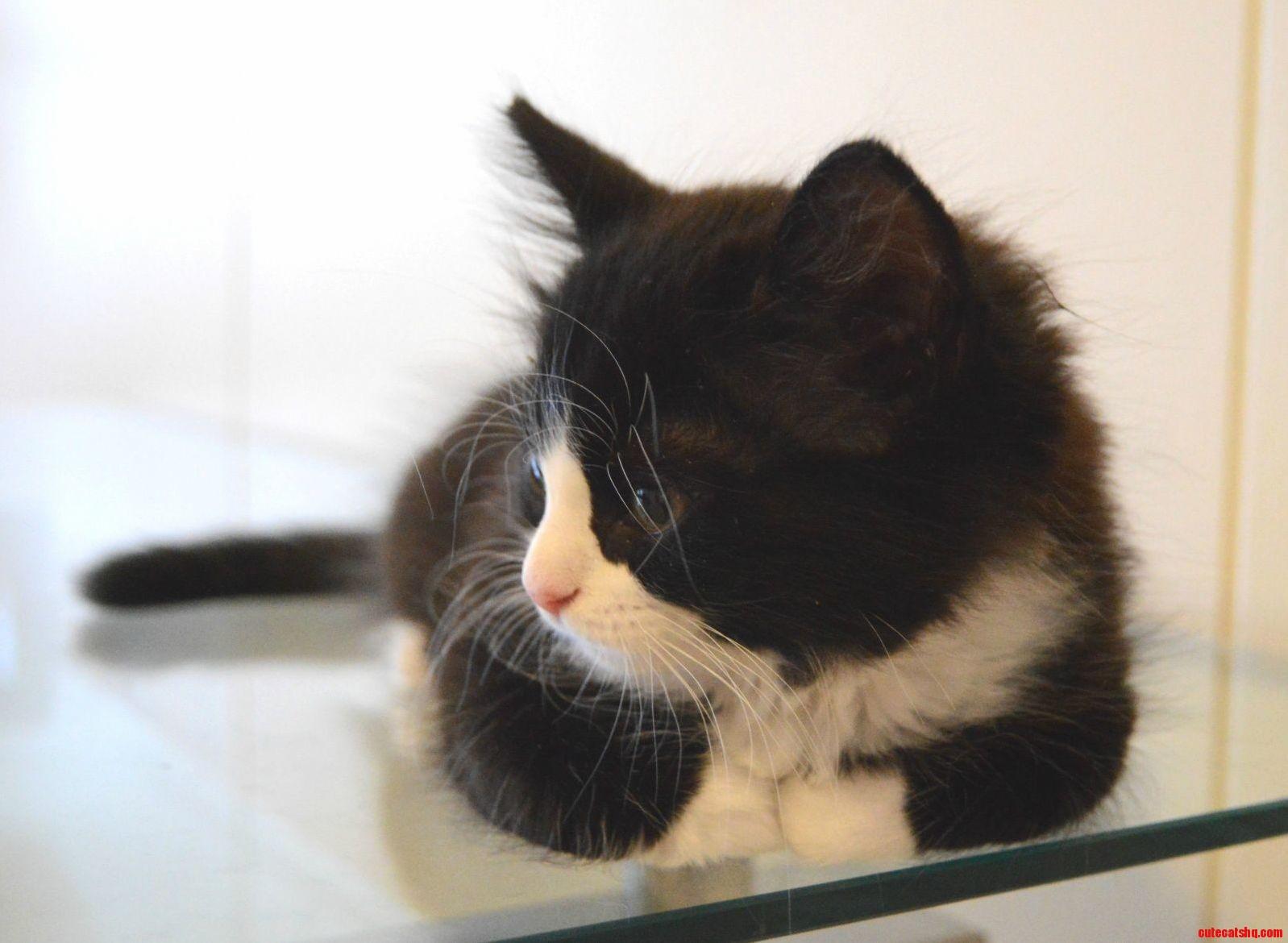 Kitten loaf on glass