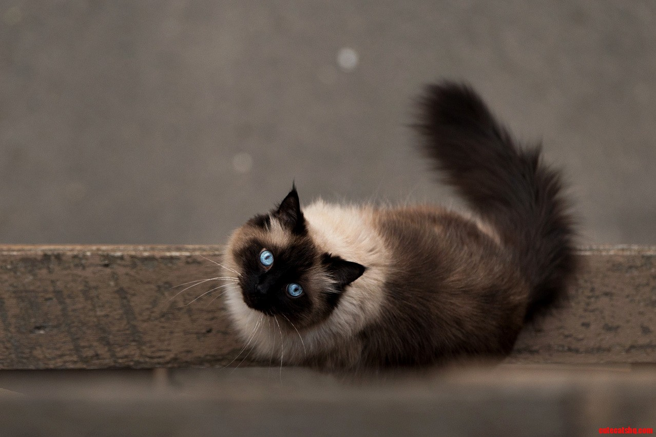 Last night i looked over my balcony and shot my downstairs neighours rag doll cat.