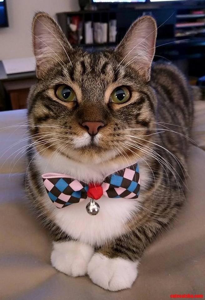 Leo looks spiffy wearing his new bowtie