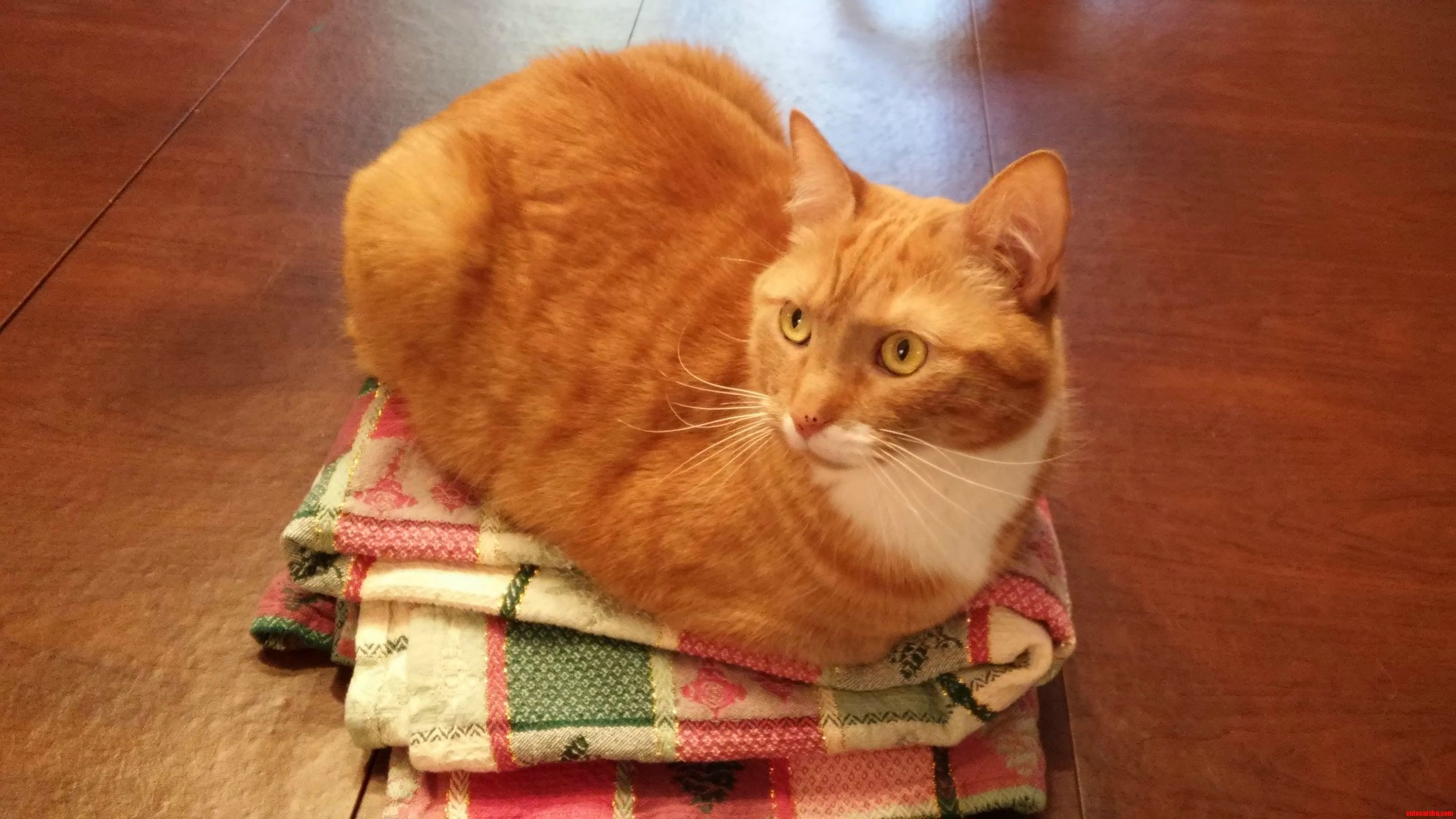 Loaf atop a pedestal of folded tablecloth