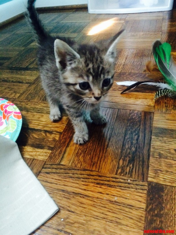 Meet chico one of the kittens my mother adopted