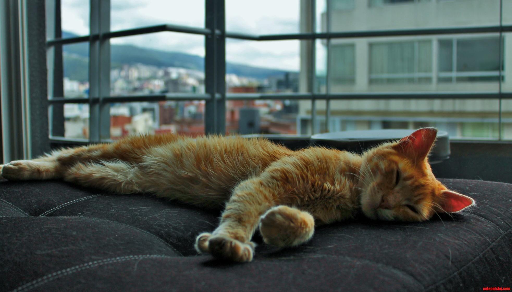 My brand new ecuadorian kitty kneads in his sleep