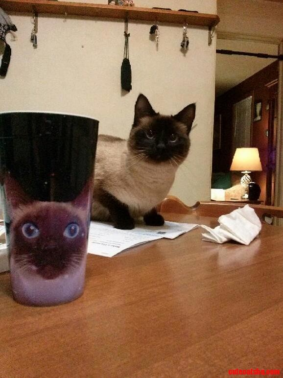 My cat and my cat cup