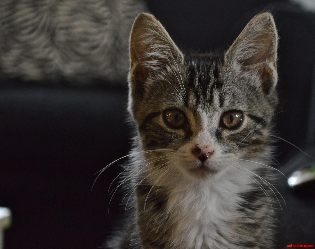 My favorite glamor shot of our new kitten ness.