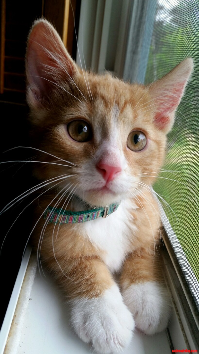 The pink nosed ginger…