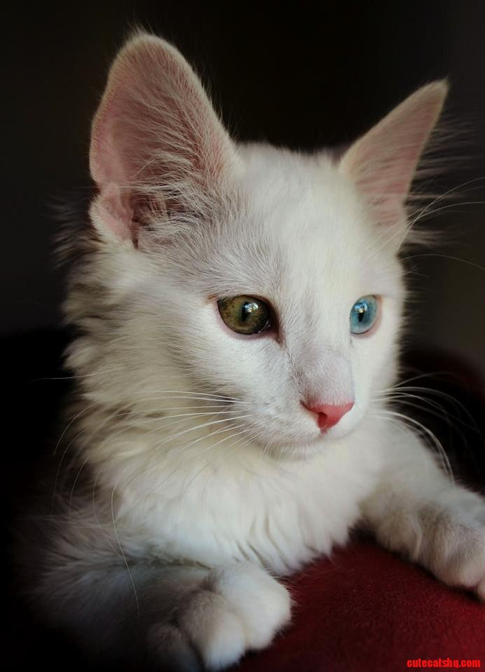 This is my cat coco. he is now 3 months old.