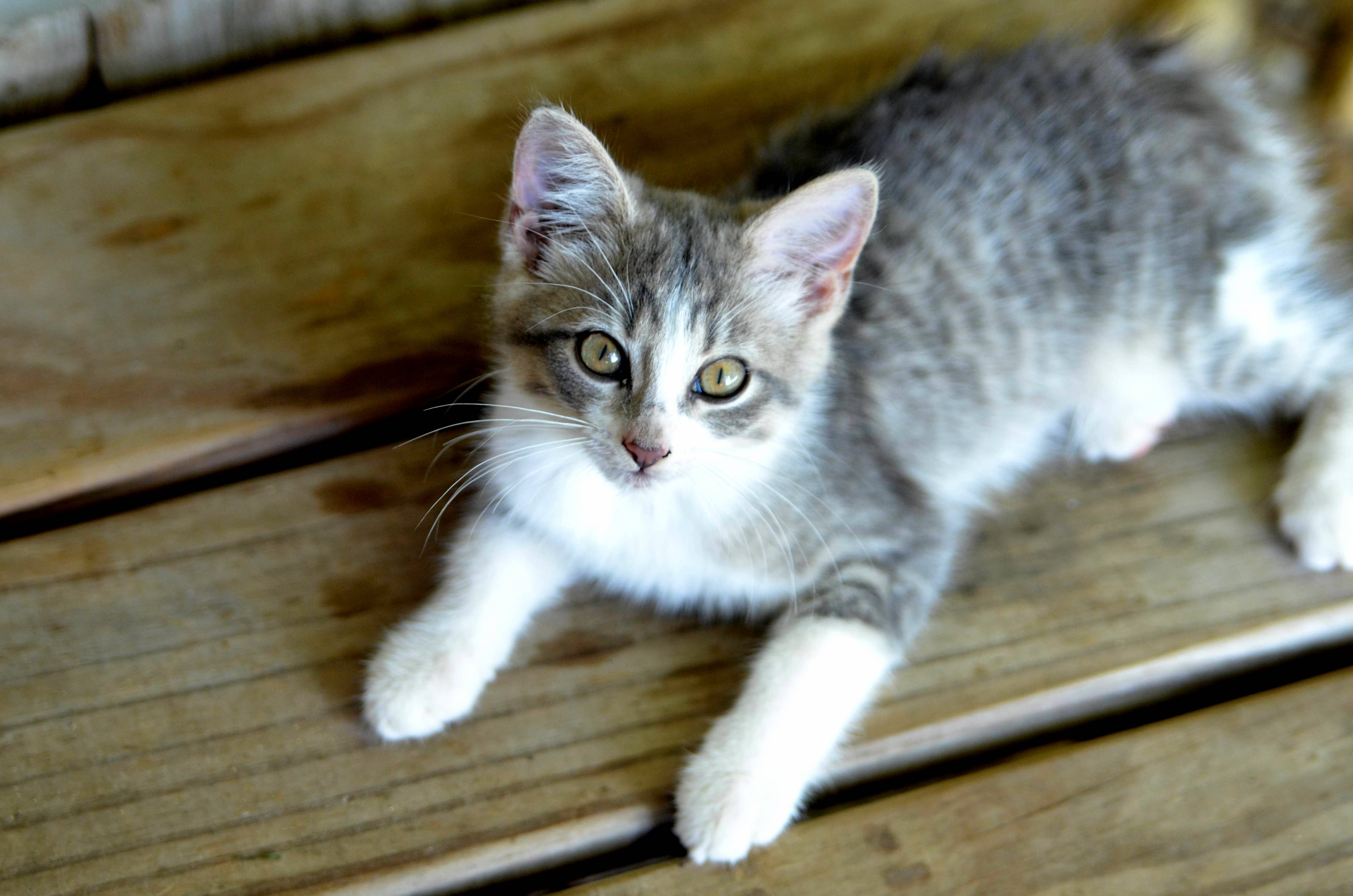 A barn kitten oc xpost