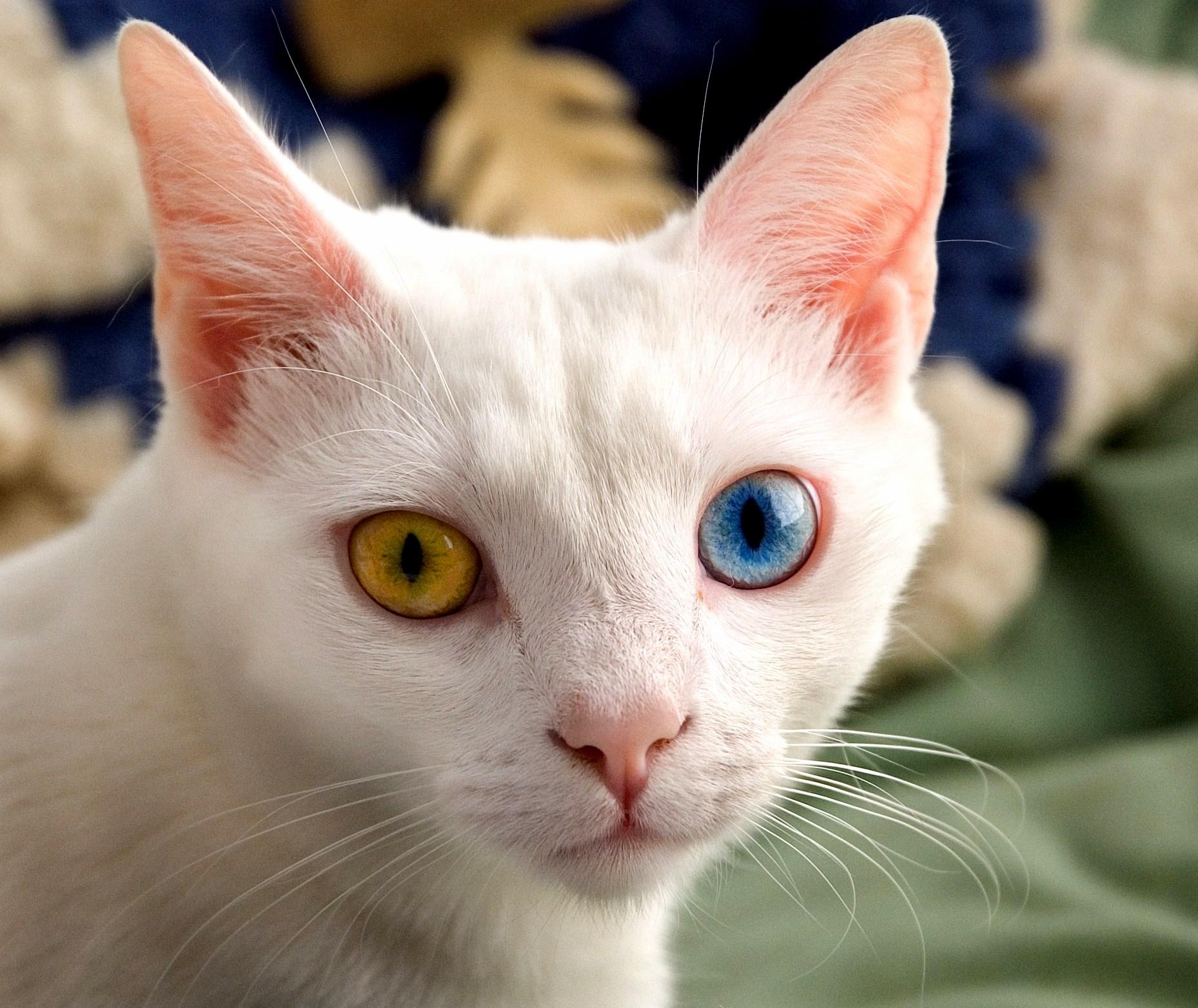 A cool cat