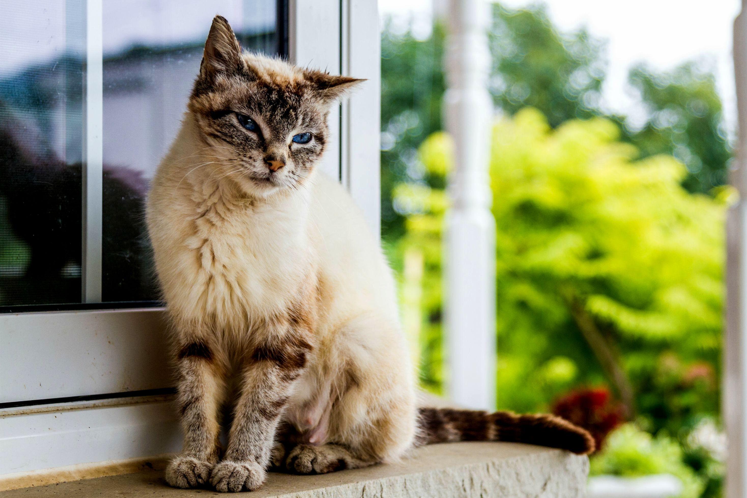A pretty mother barn cat i met.