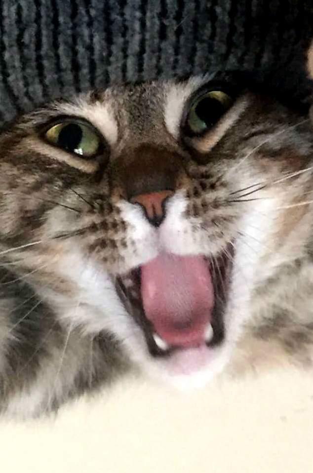 Aaaaaaaaaaah