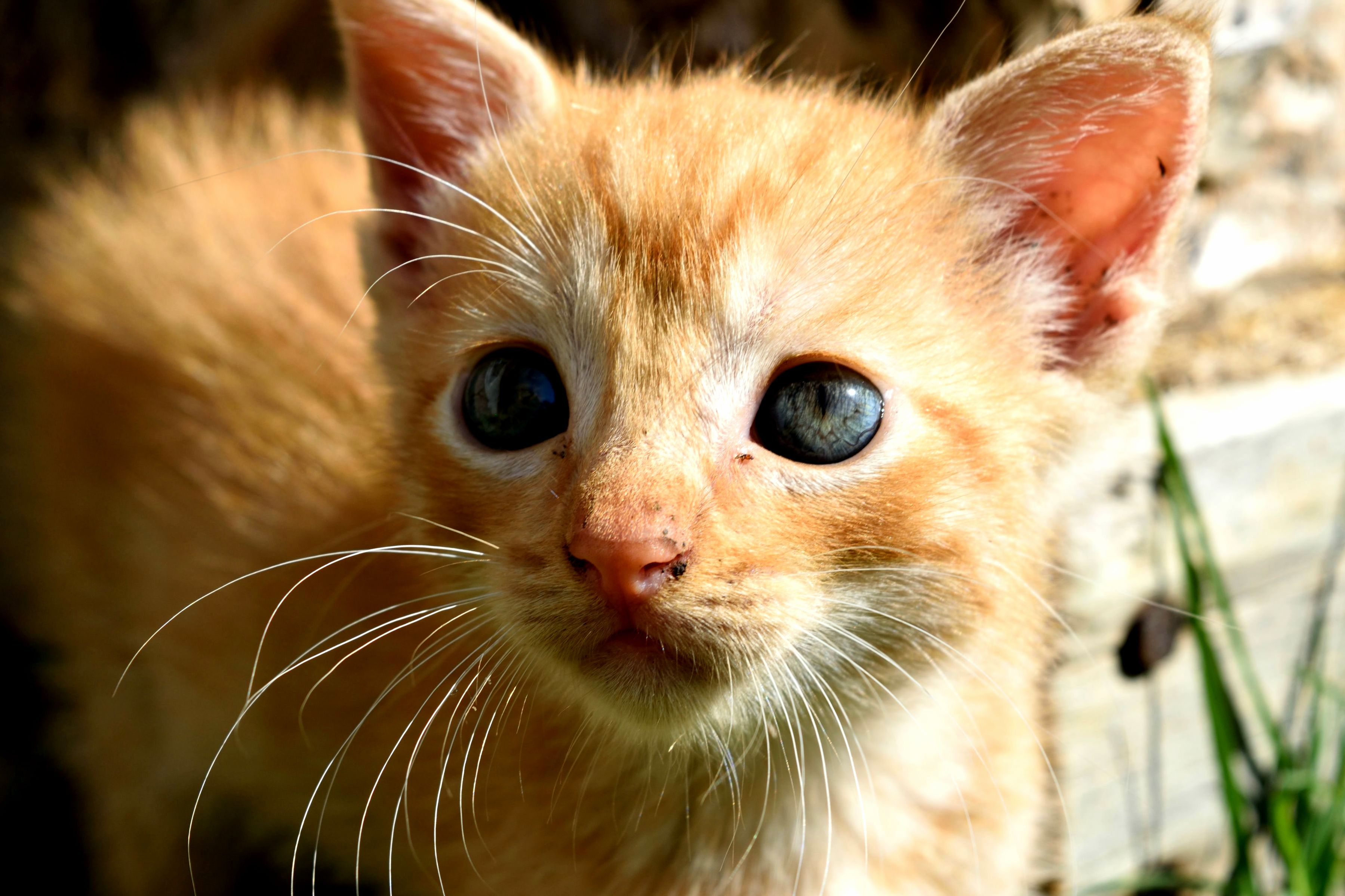 barn kitten says good morning cute cats hq pictures of cute