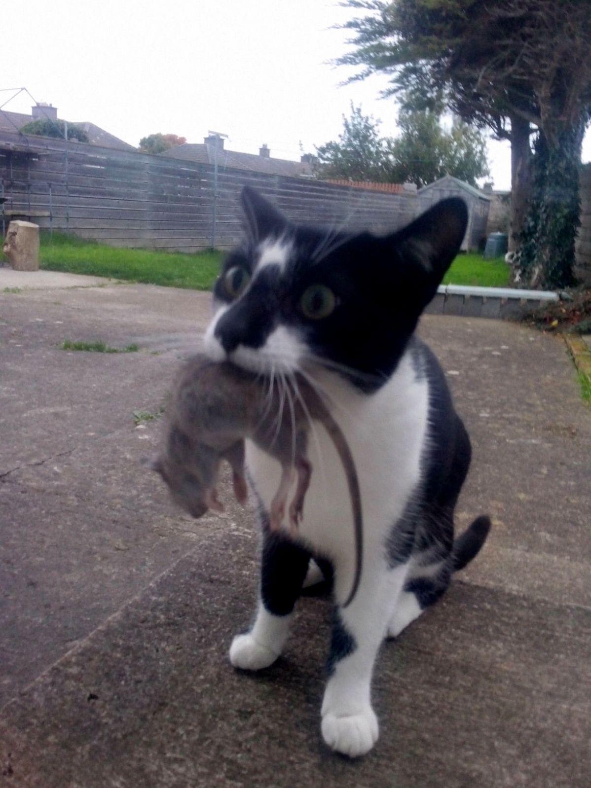Billy caught a smallish rat as a guft