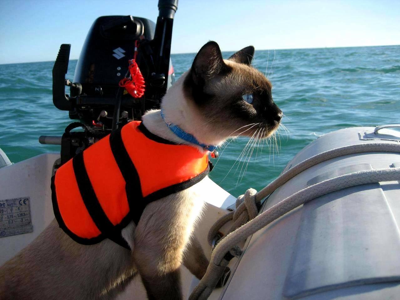 Captain kitty…