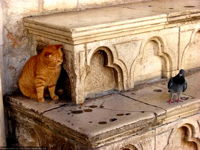 Cat says what are doing here. pigeons said i am seeing you