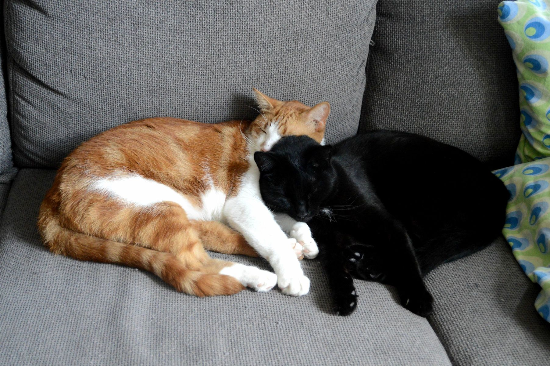 Cuddling together